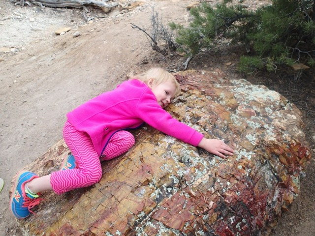 Our Petrified Tree Hugger.