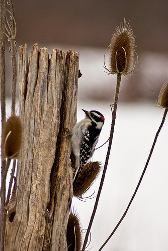 Audubon's Christmas Bird Count in Warren and Jamestown, December 17 and 18