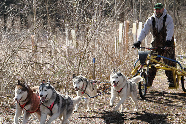 dog sled demo