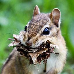 Chipmunk Photograph - Terry Lorenc