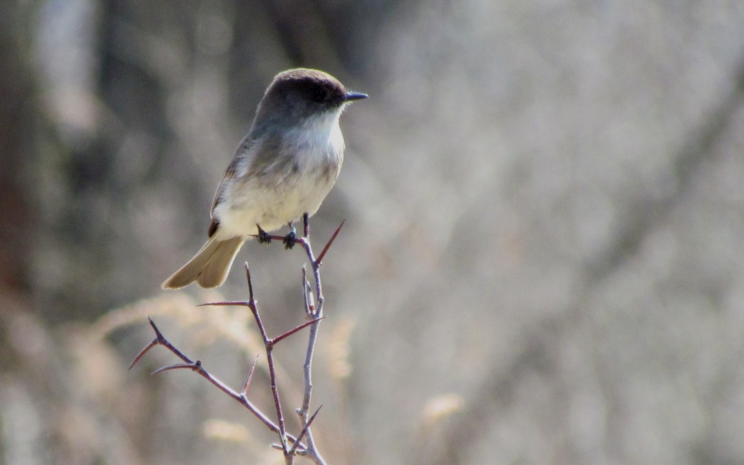 Birding Thoughts by Ruth Lundin