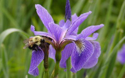 On Purple by Sarah Hatfield