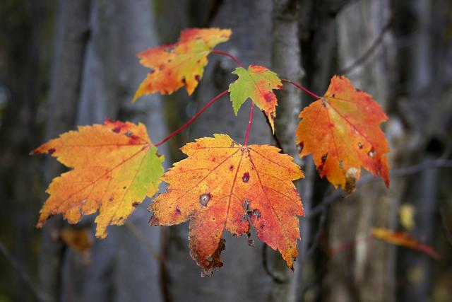 Autumnal Recrudescence by Sarah Hatfield