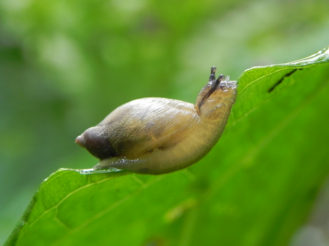 Snails: More Interesting Than You Think by Katie Finch