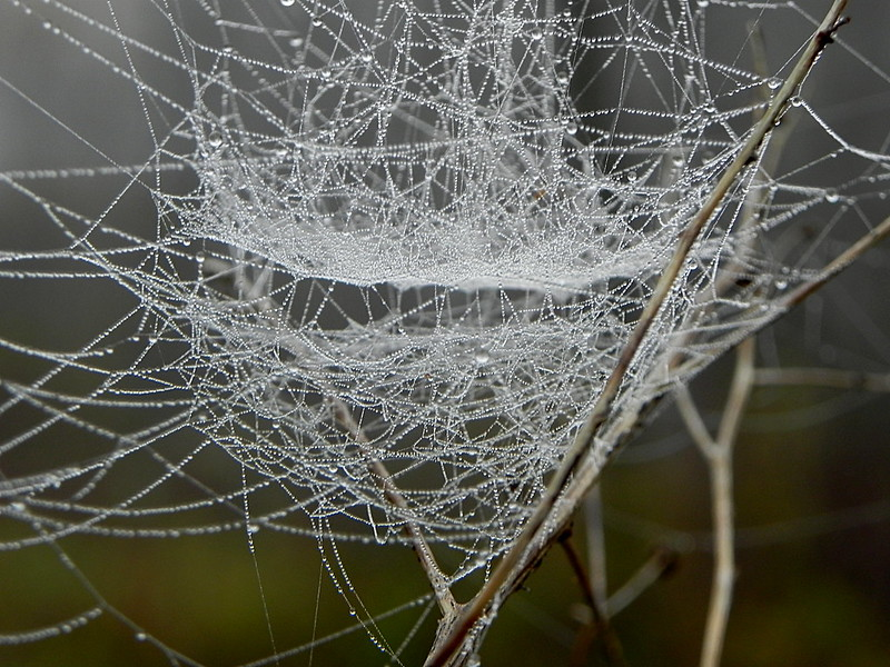 Ever-present Spiderwebs by Sarah Hatfield