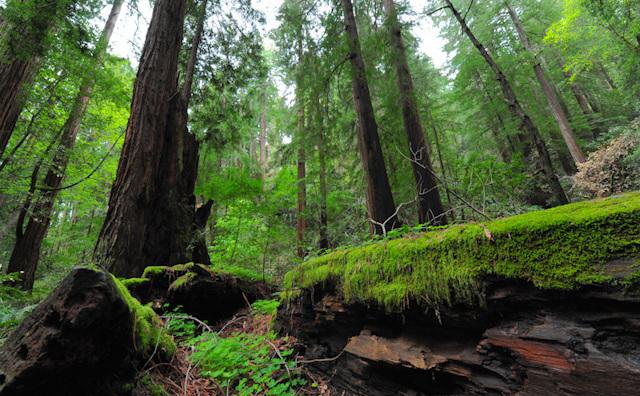 Audubon 2020 Nature Photography Contest Closes August 31