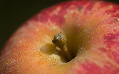 Learn to Test for Apple Ripeness at Audubon, Tuesday, September 22