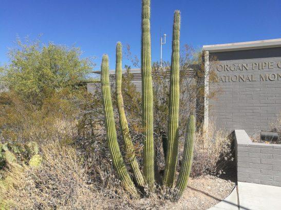 Organ Pipe Nationalpark in Arizona