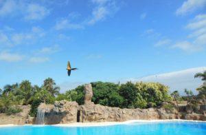 Bunte Vogelwelt im Loro Park auf Teneriffa