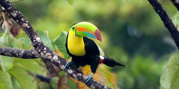 Panama Regenwald