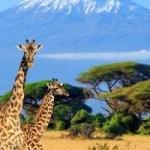 Die Big Five am Mount Kenya