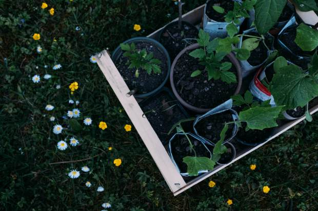 00 Zero Waste Gardening.jpg