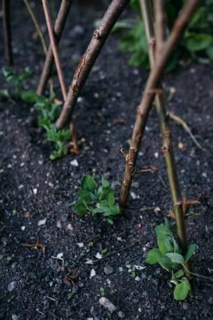 06-2 Zero Waste Gardening-10