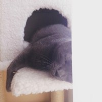 Être Famille d'accueil pour chats