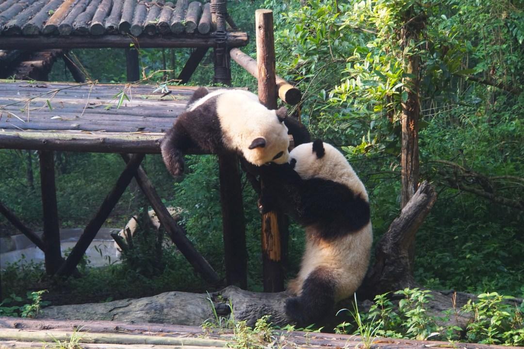panda-jeux