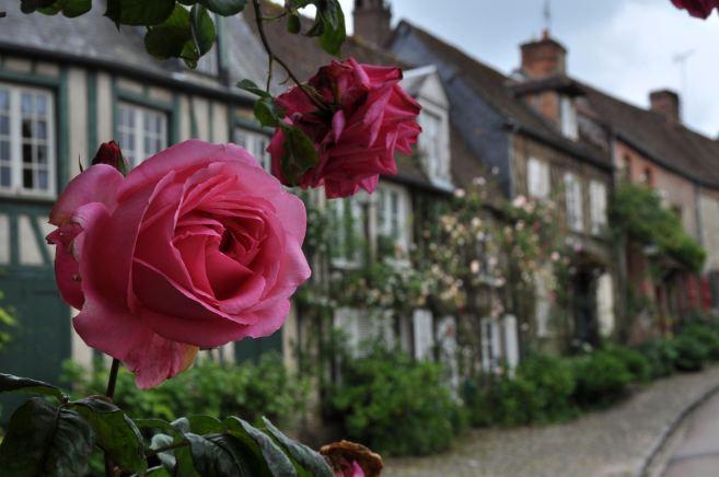 gerberoy_roses