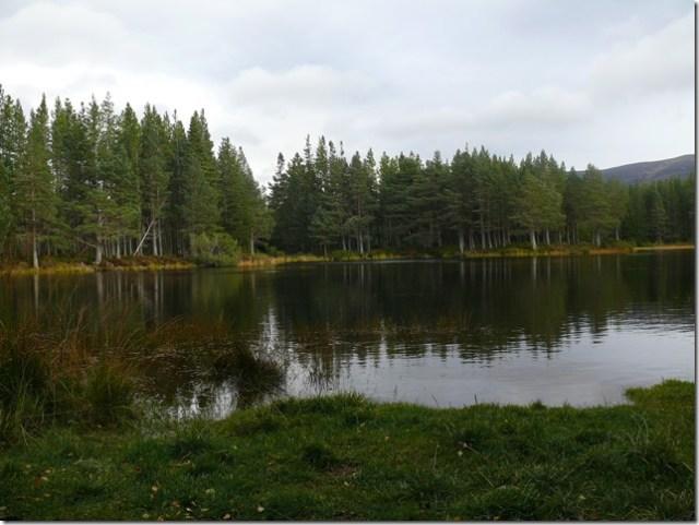 glenmoreforest15