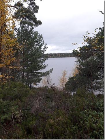 glenmoreforest2