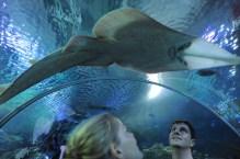 Aquarium KLCC