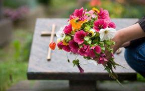 cadaveres en abono en washington
