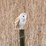 Bird Watching - 2016-02-09 Martin Mere-1
