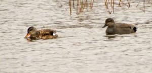 Bird Watching 2016-03-08 Brockholes
