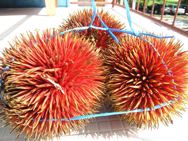Behold The Red Durian! (2/4)