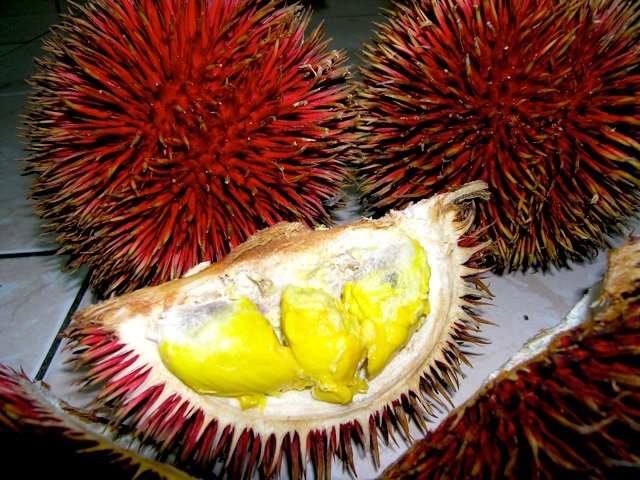 Behold The Red Durian! (4/4)