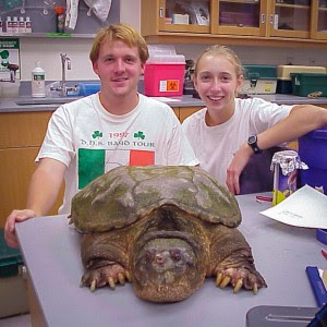 """Kristine Grayson, with David Stroupe (now an assistant professor of education at Michigan State University), captured this state record 52-pound snapping turtle in 2001 while she was an undergraduate at Davidson College in North Carolina. In case you're wondering how, the duo landed """"Biggy"""" in a farm pond using a baited hoop trap. (Courtesy photo)"""