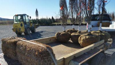 project dogwood