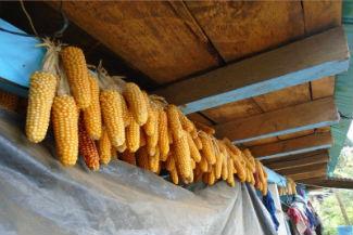 guatemala food sovereignty