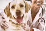 veterinarian dog