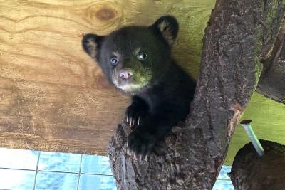 bear cub wildlife center
