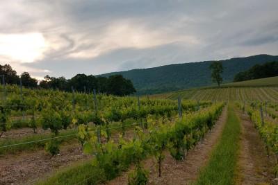 Above Ground Winery