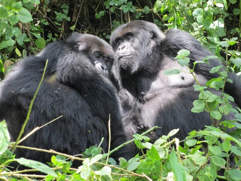 4 Day Rwanda Small Group Trekking Tour