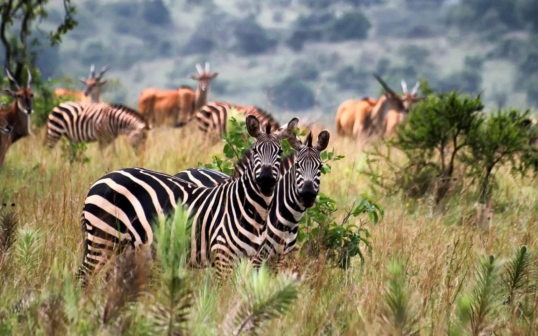 Five reasons to consider an East Africa Safari today