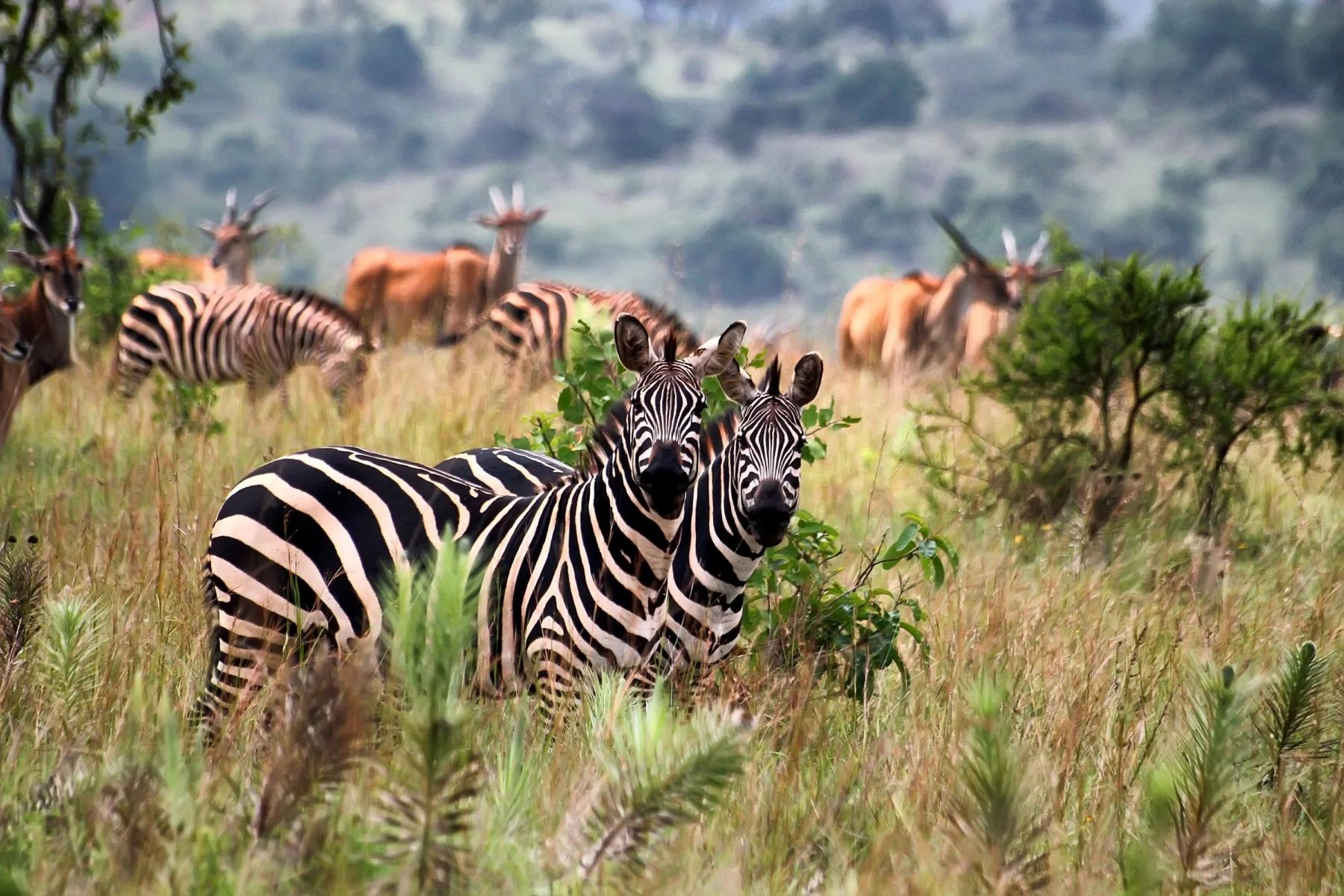 The Best Of East Africa Wildlife Safari Adventure Now