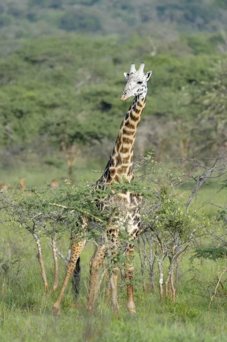Tips to consider before planning your first African safari
