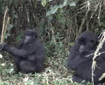 6-day Rwanda Wildlife Tailor- Tour Augustine Tours