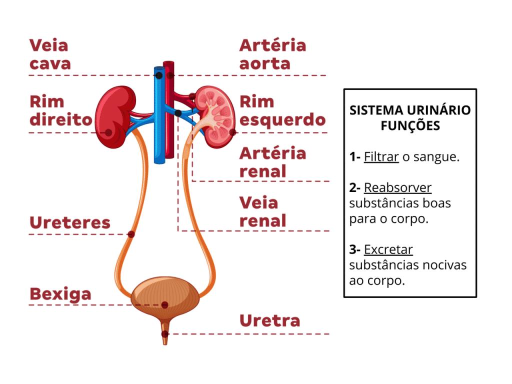 rins e suas funções