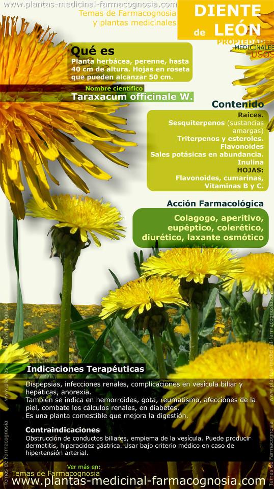 Propiedades y beneficios del Diente de León. Infografía