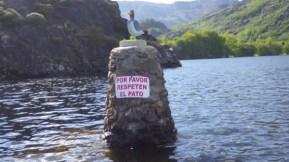 El pato de Ribadelago