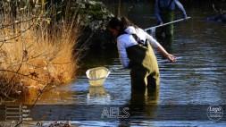 muestreo fauna acuática1