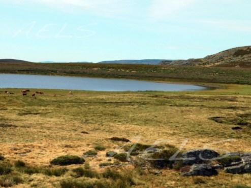 Parte profunda de la laguna (al este)