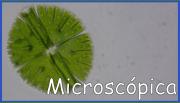 boton_microsweb-01