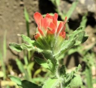 Sespe - Rose Falls 04-10 (33)