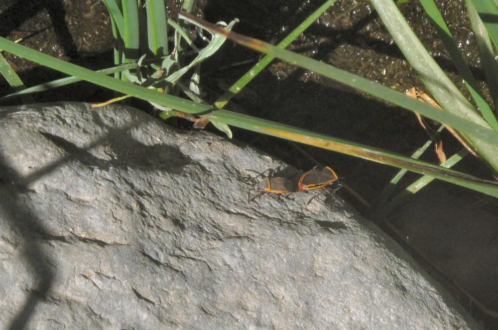 Piru Creek 5-14-09 (28)