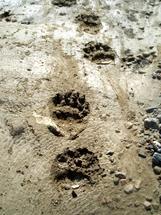 Piru Creek Tamarisk (1)