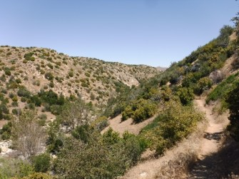 Bradford Ridge Path (16)