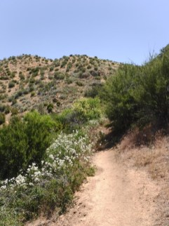 Bradford Ridge Path (17)